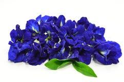 Blommor för purpurfärgad ärta. Royaltyfri Foto