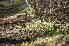 Blommor för sol för sommarlandskapbakgrund Fotografering för Bildbyråer