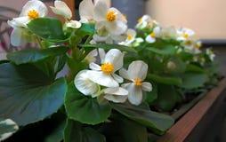 Blommor för sommarterrassen, balkong Royaltyfri Fotografi