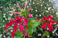 Blommor för trädgårdsmästarna av ditt hem Royaltyfri Fotografi
