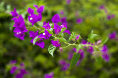 Blommor förgrena sig på Arkivbild