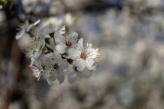 blommor f?r ?ppledjupf?lt blir grund treen fotografering för bildbyråer