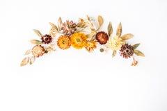 Blommor, filialer, sidor och kronblad för guling torra på vit bakgrund Royaltyfria Foton