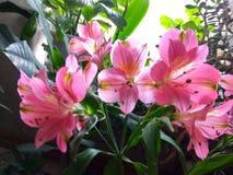Blommor från älskad dotter Fotografering för Bildbyråer