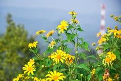 Blommor från överkant av en kulle royaltyfri foto