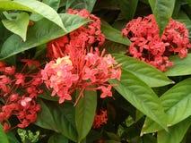 blommor från ahsan manjil arkivbild