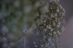 Blommor från ett bröllop Arkivbilder