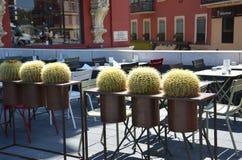 blommor från ett trevligt kafé och en mycket special kaktusfamilj Royaltyfri Fotografi
