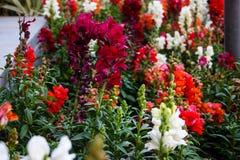 Blommor från Israel royaltyfri fotografi