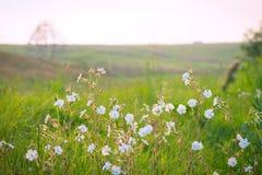 Blommor från naturen, gräs Arkivfoton