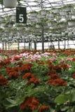 Blommor för grönt hus Royaltyfria Foton