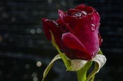 Blommor fr?n min tr?dg?rd Sk?nhetdetaljer royaltyfria foton