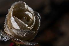 Blommor fr?n min tr?dg?rd steg white fotografering för bildbyråer