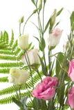 blommor fragment isolerad blek white Fotografering för Bildbyråer