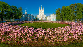 Blommor framme av den Smolny domkyrkan i St Petersburg Royaltyfri Bild