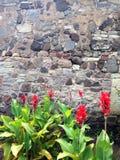 blommor framme av en stenvägg Royaltyfri Fotografi