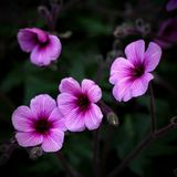 blommor fyra Royaltyfri Fotografi