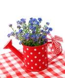 blommor glömmer mig inte Fotografering för Bildbyråer