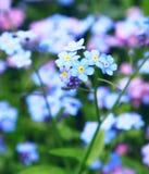 blommor glömmer mig inte royaltyfri bild
