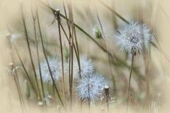 Blommor gräs på morgonen Arkivbilder