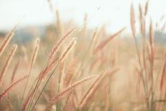 Blommor gräs suddig bakgrund Royaltyfria Bilder