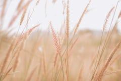 Blommor gräs suddig bakgrund Arkivfoto