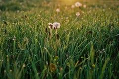 blommor gräs white Royaltyfria Foton