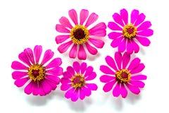 Blommor grupperar på vit bakgrund arkivbild