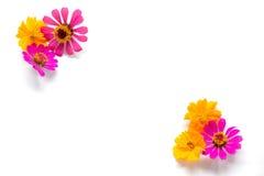 Blommor grupperar på vit bakgrund Royaltyfria Foton