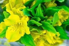 Blommor härlig bukett fotografering för bildbyråer