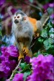 blommor härmar ekorren Arkivfoton