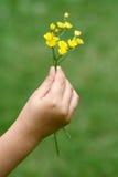 blommor hand mitt Fotografering för Bildbyråer