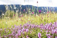 Blommor, herbals och gräs på bergen Royaltyfri Fotografi