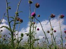Blommor himmel Fotografering för Bildbyråer