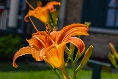 Blommor in honom sommar arkivbild