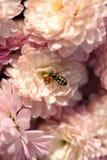 Blommor i aftonsolen Arkivbilder
