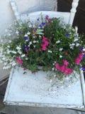 Blommor i antik Highchairpotta Arkivbilder