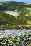 Blommor i Azores Arkivbilder