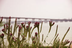 Blommor i bakgrundssuddighetsbron Royaltyfria Foton