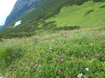 Blommor i berg royaltyfri foto