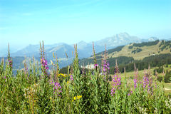 Blommor i berg Arkivfoton