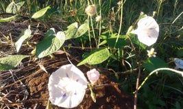 Blommor i blom 3 royaltyfria foton