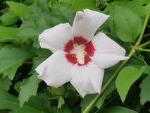 Blommor i blom Arkivbild