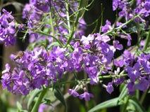 Blommor i blom Fotografering för Bildbyråer