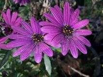 Blommor i blomma Royaltyfri Bild