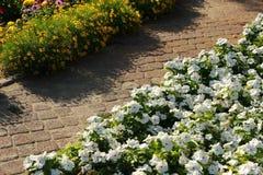 Blommor i blomsterrabatt Arkivbilder