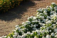Blommor i blomsterrabatt Royaltyfri Bild