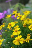 Blommor i blomsterrabatt Arkivfoto
