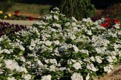 Blommor i blomsterrabatt Arkivbild