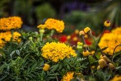 Blommor i botanisk trädgård Arkivfoto